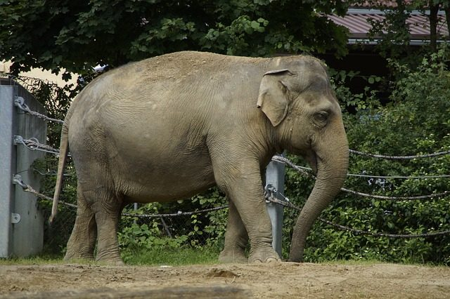 technology innovation Bengal Elephant warning systems