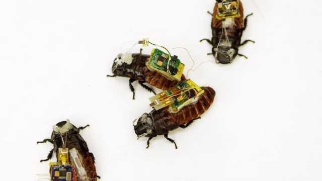 Cyborg Cockroaches 1